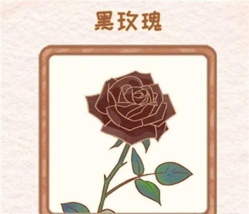 《花店物語》黑玫瑰獲取方法
